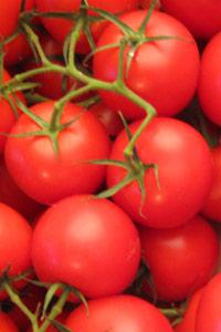 tomaten_trivia.jpg